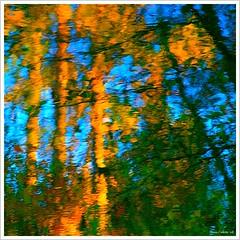 Méditation d'automne...!!!