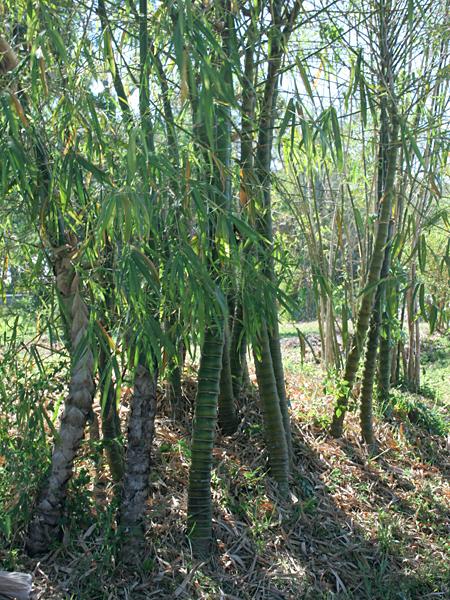 Cool-Bamboo