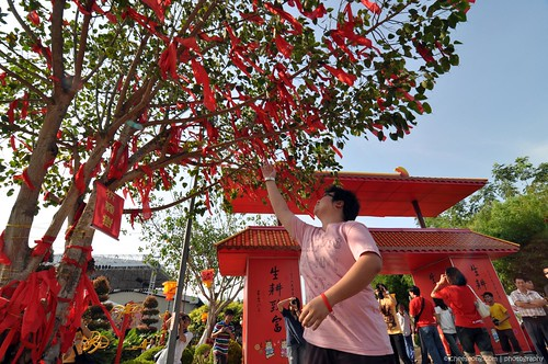 wish tree chinois