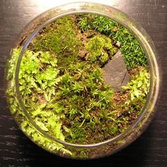 Super cute moss garden