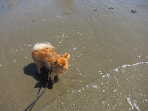 Wave Dog