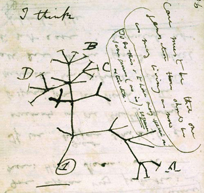 "Darwin's hand-drawn ""tree of life"""