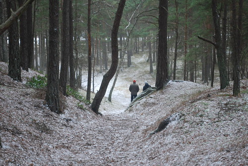 Walking through the wintry forest