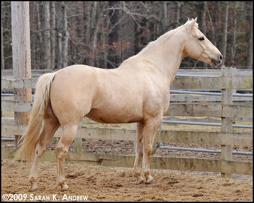 J.R. is my kind of Quarter Horse...