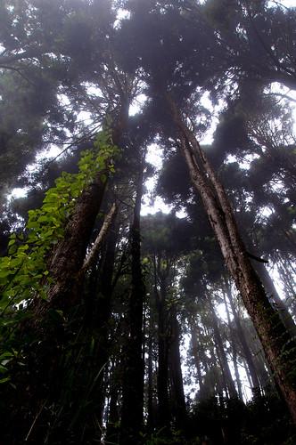 Wangyou Forest 忘憂森林