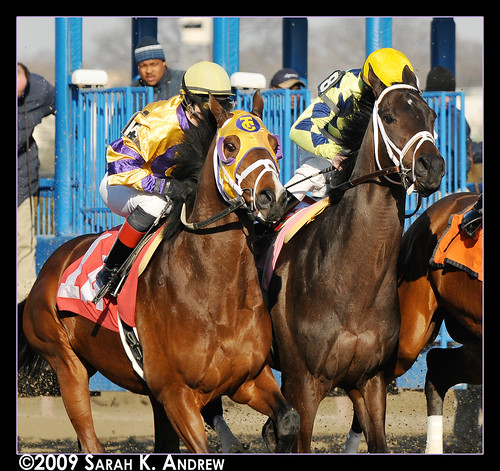 Smart Tomcat and Haitian Sensation at the start of the 6th