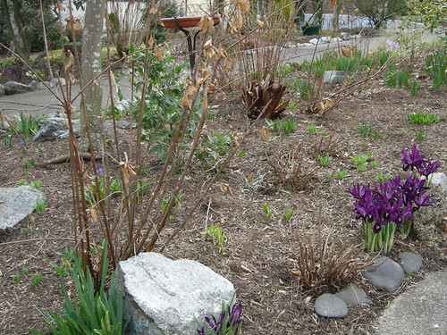 Closer View of Portland Garden