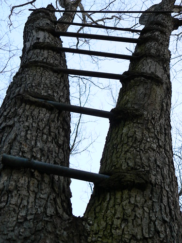 Fairystone Wildlife Management Farm - Ladder Tree Both Sides