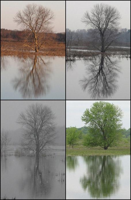 Seasonal Differences - Mccraylori's Favorite Tree