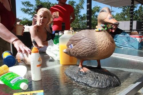 F-Duck