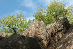 Cliff that rocks (with Quercus robur)