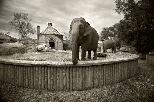 Audubon Elephants - Section A
