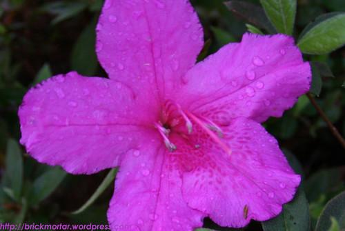 flower_dew