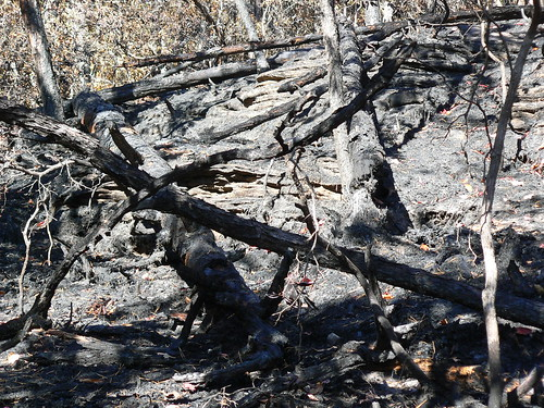 Sinking Creek Mountain - Ascent - Forest Fire - Burnt Logs