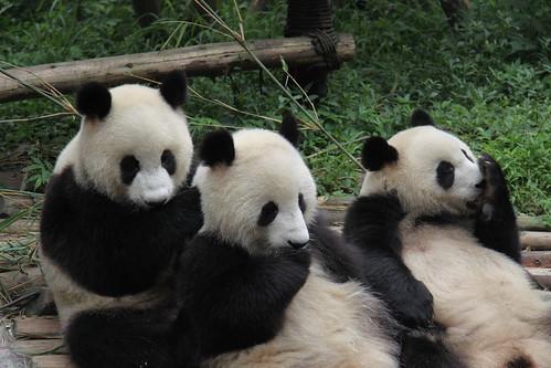 Kung Fu panda??? X3