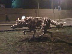 Wolf prowling Grove Lane