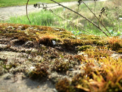 moss covering an old, fallen stone, basking in the spring afternoon sun.