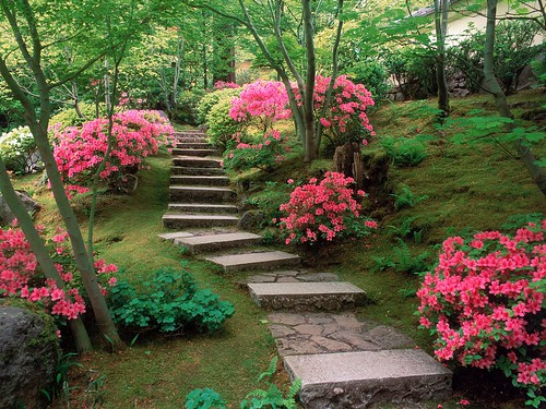 Azaleas, Japanese Garden, Oregon