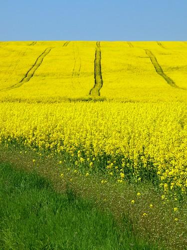 """Blooming ~ Gemer, Slovakia"" by Martin Sojka"