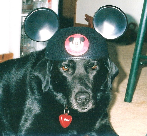 Or the Mouse Ears.....