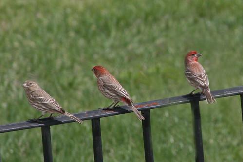 365-117 birds