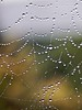 """Wet morning • <a style=""""font-size:0.8em;"""" href=""""http://www.flickr.com/photos/24419989@N07/3700429313/"""" target=""""_blank"""">View on Flickr</a>"""