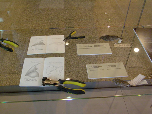 Pinzones y herramientas