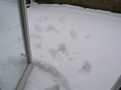 Paul opened the balcony door to run through the snow (bare foot)