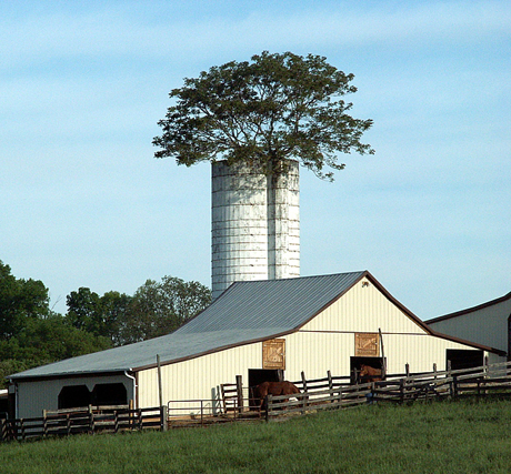 Bedford County Silo Tree - Spring