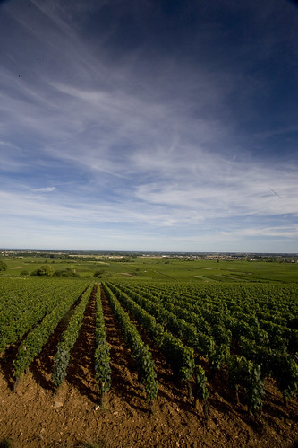 Vineyards near Beaune