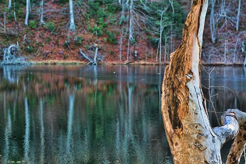 Remnants of November
