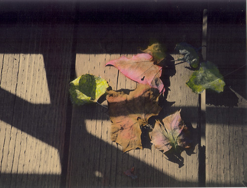 Hand colored photo of leaves  (c) Lynne Medsker
