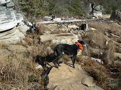 Mountain Lake -  Jimmie Observes