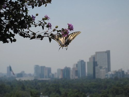 Butterfly in the Bosque de Chapultepec