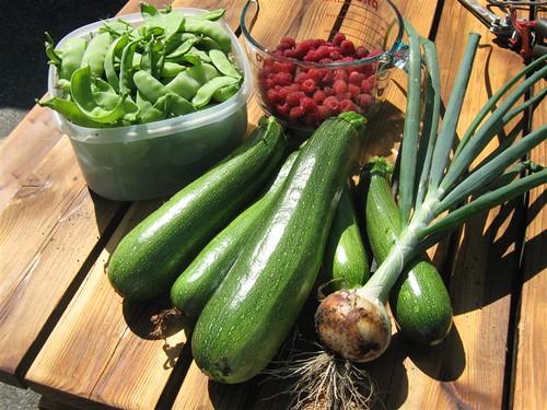 Today's Harvest 08-01-09