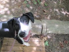 Mamie the sunshiny dog