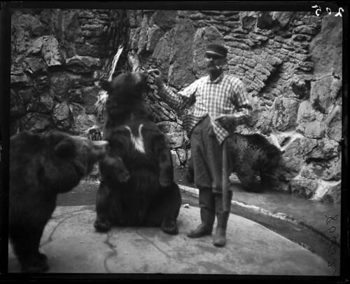 Zookeeper feeding bears