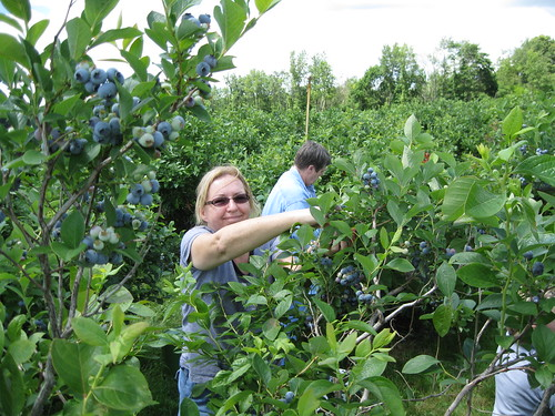 Picking the blueberries!