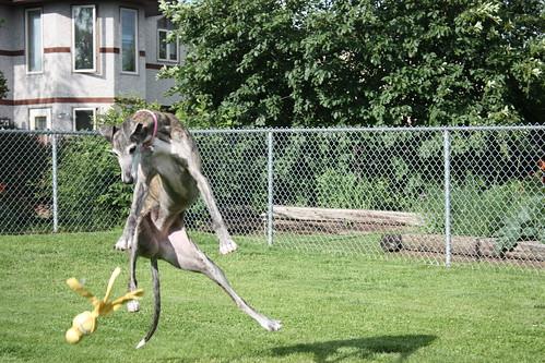 Sabrina is airborne!