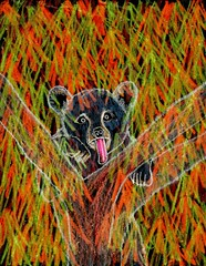Bear Creek Hide & Seek