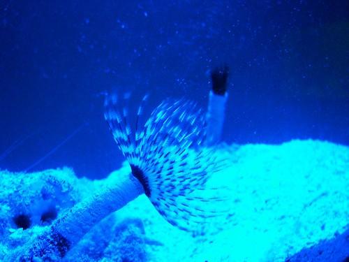 Mactan Island Aquarium by you.