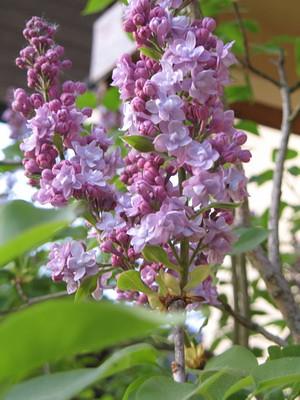 Garten_25.04.11_012_klein