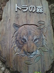 Tiger, Ueno Zoo