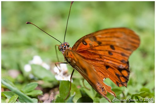 "Mariposa • <a style=""font-size:0.8em;"" href=""http://www.flickr.com/photos/20681585@N05/3192374373/"" target=""_blank"">View on Flickr</a>"