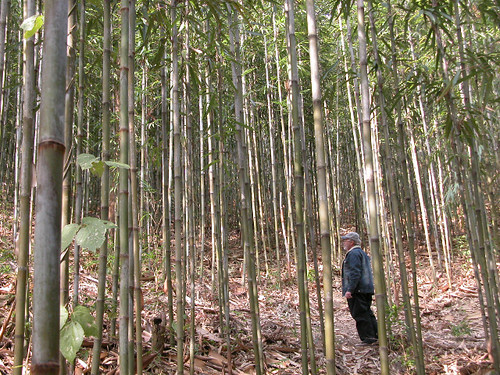 Glenn Brackett among the Bamboo