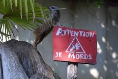 Erdmännchen im Zoo d'Amnéville