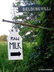 Raw Milk in Ashfield, MA