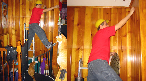 20090124 - party prep - ladder craziness - 175-7537-diptych-7534 - even the cats know this is unsafe! - please click through to leave a comment on FlickR