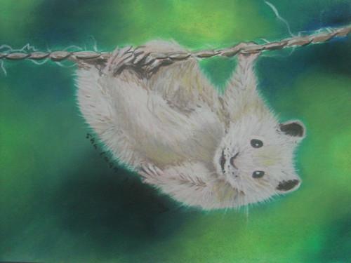 吊在繩上的浣熊_修改1