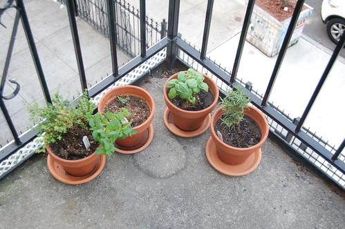 Lauren's Herbs on the front Balcony